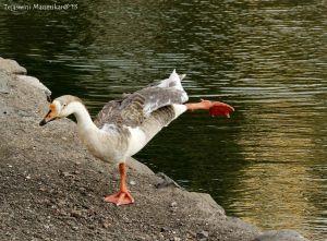 19. Yoga Duck